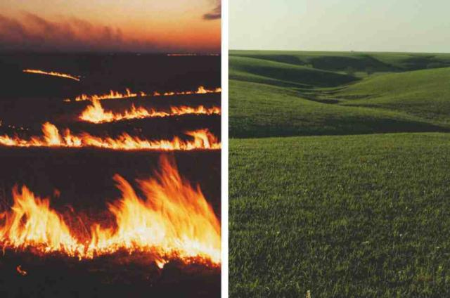fire and prairie